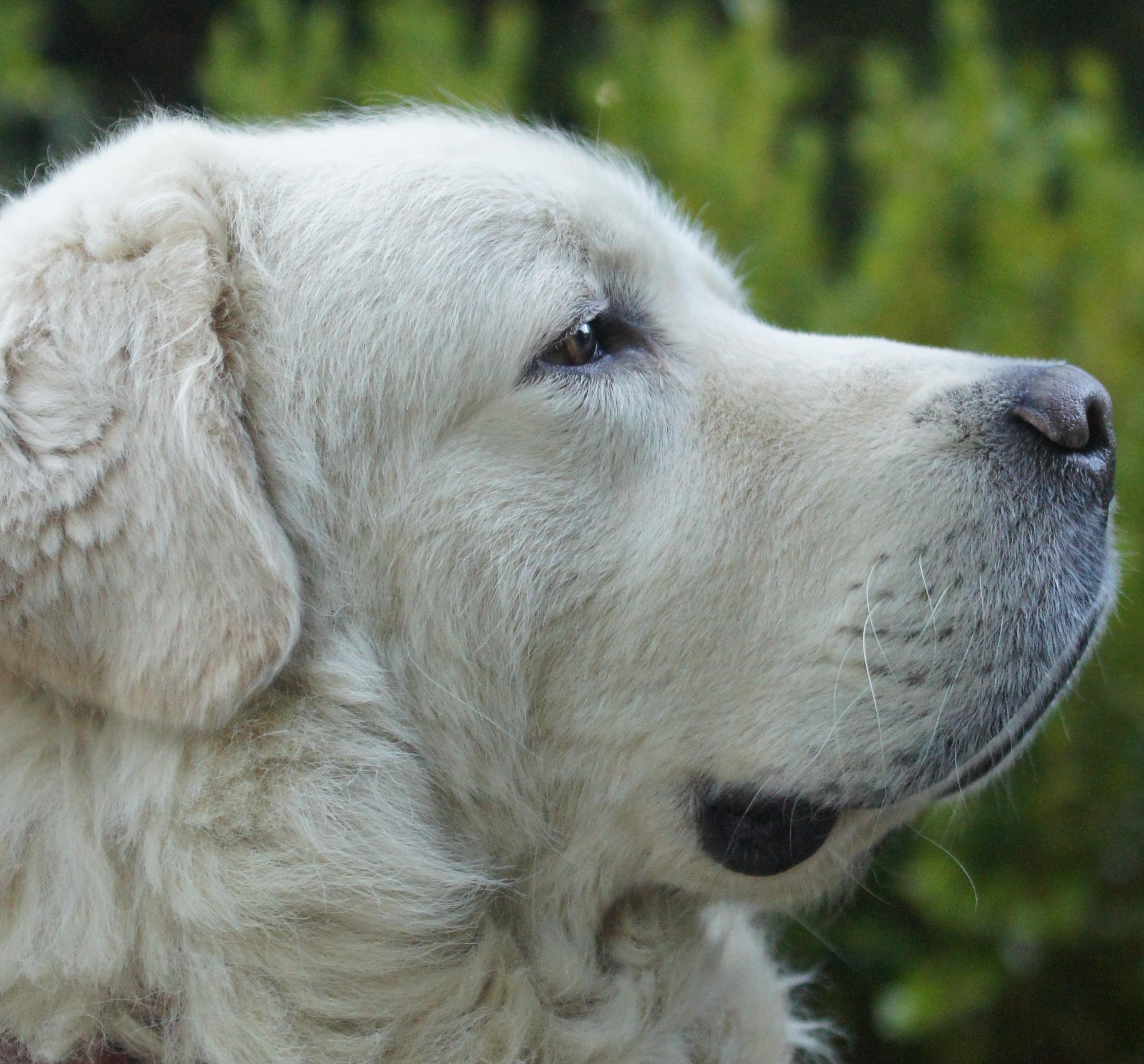 Rupture des ligaments croisés chez le chien - Fiches pratiques chiens